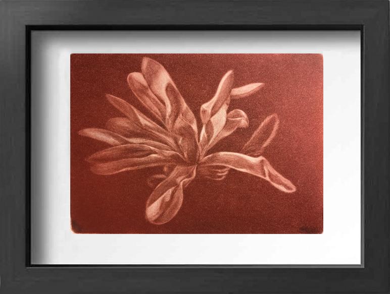 Ulk_framed_magnolia